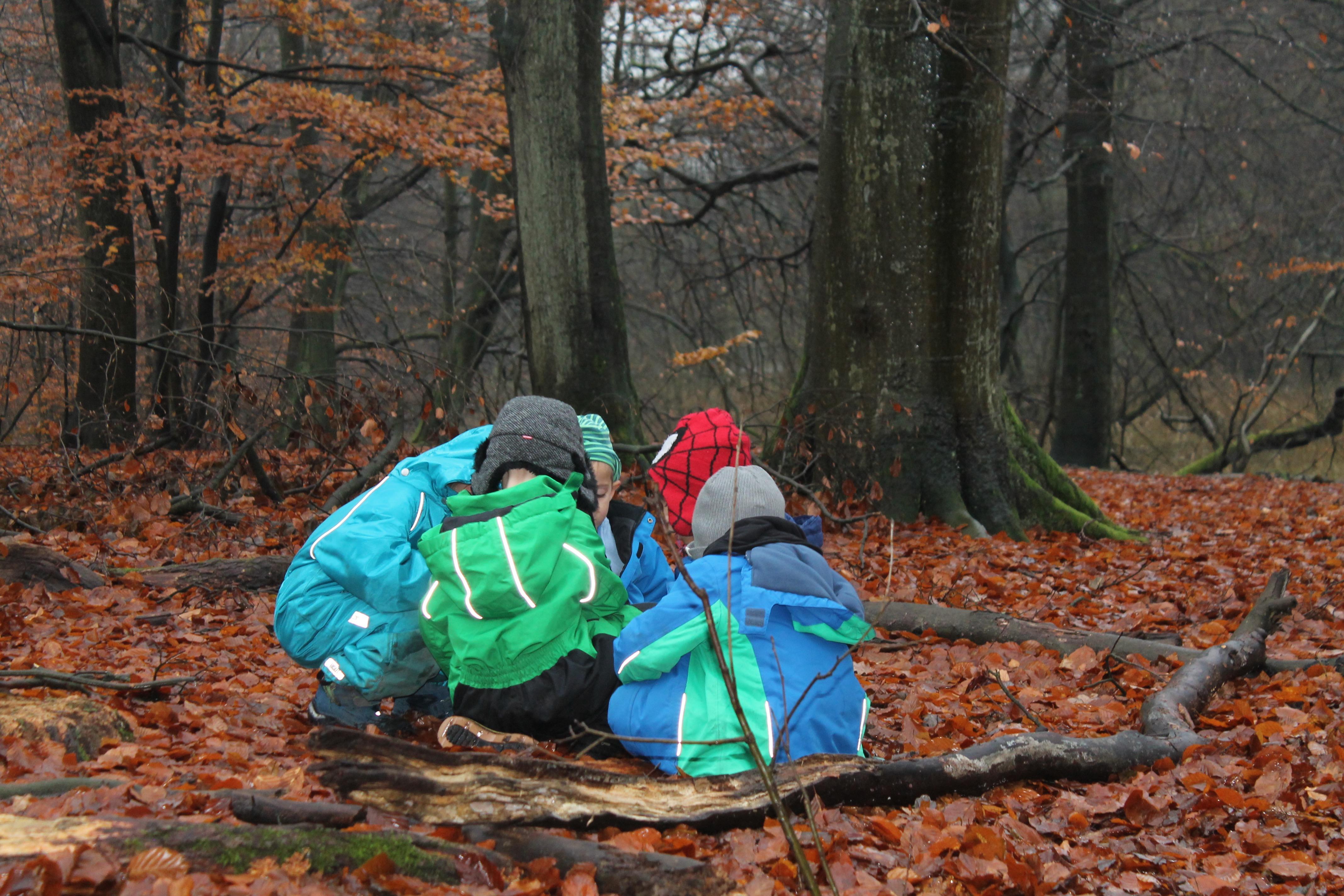 IMG_7115 Wald